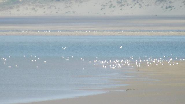 Many seagulls gathering at the shoreline