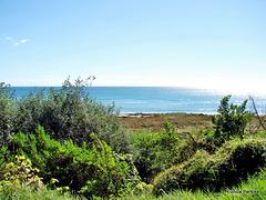 Bay of Plenty coastline