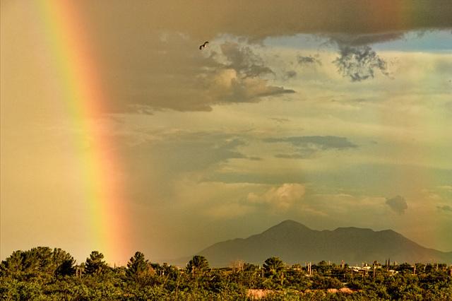 A Misty Rainbow