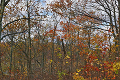 Looking Up – High Point State Park, Sussex County, New Jersey