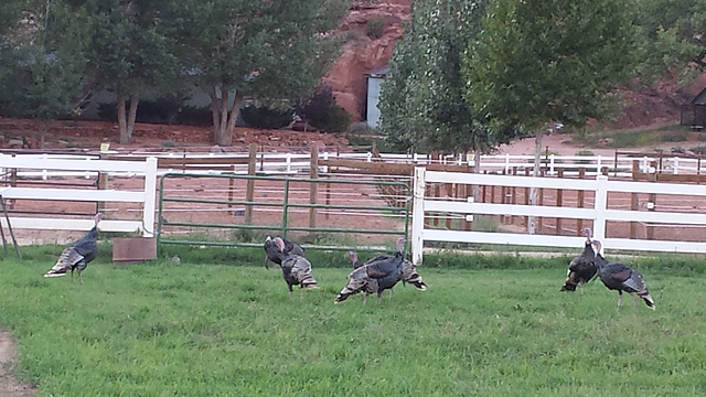 2014.09: UT: Animal Sanctuary