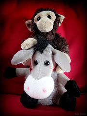 Horseplay: Donkey ride