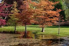 Arboretum des Grandes Bruyères - Forêt d'Orléans