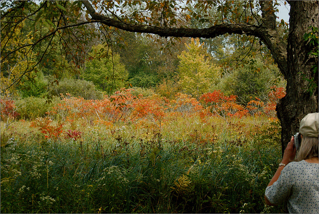 Fall Color, with Joan
