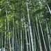 arashiyama boos