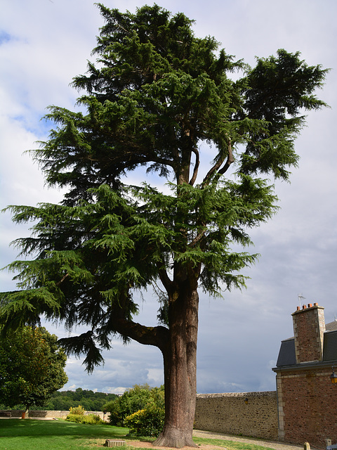 Dinan 2014 – Tree