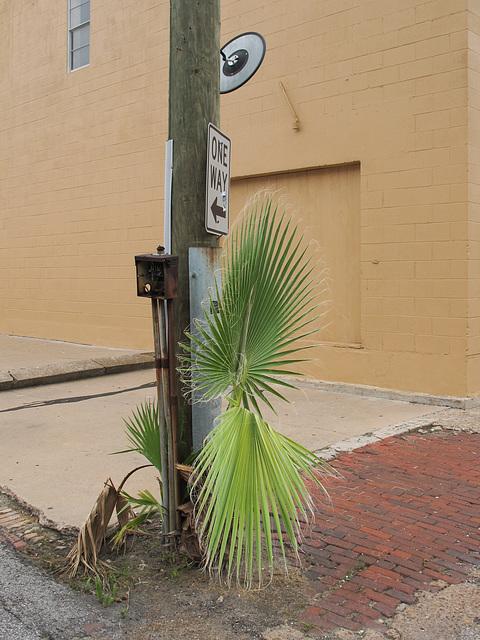 Urban street weeds.