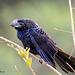 ~ Black Bird ~