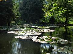 Castello del Roccolo - il laghetto del parco