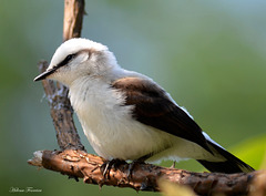 ~ Just a bird ~