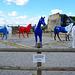 Caen 2014 – Musée de Normandie – Équitations – New colours for horses