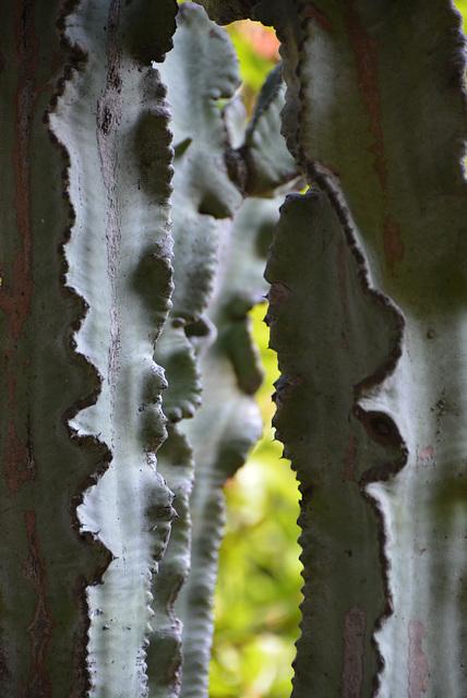 franges de cactus