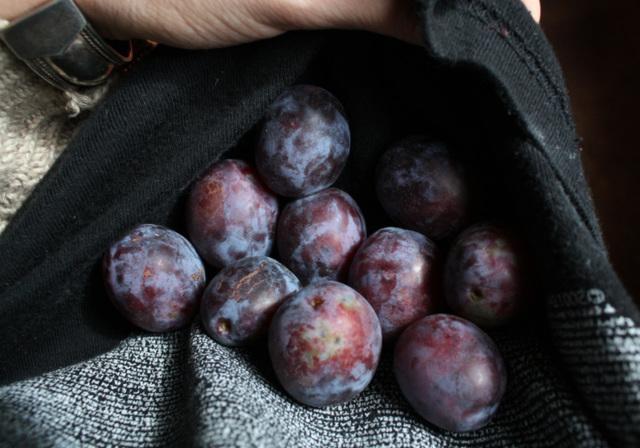 First plums