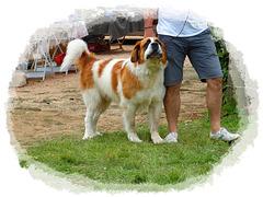 Pouvez pas dire à mon maître que j'suis un gentil chien ? il a rien compris, y m'fatigue...