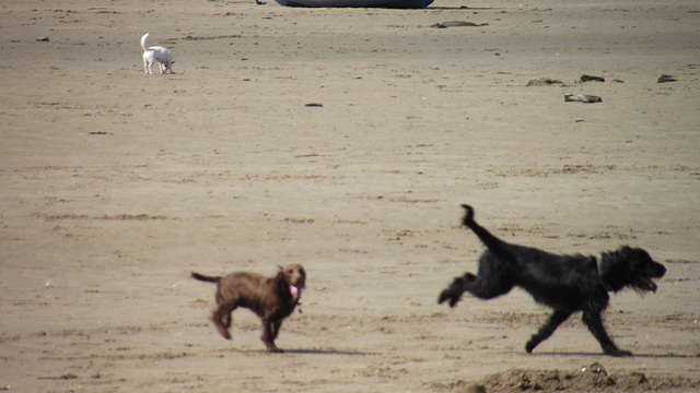 The two dogs were really having a whale of a time on the sand