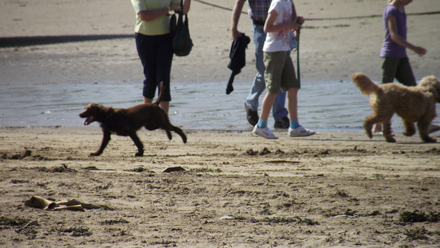 So much fun for the dogs on the beach