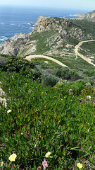 There Are No Straight Lines in Corsica