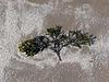 Seaweed & crushed shells