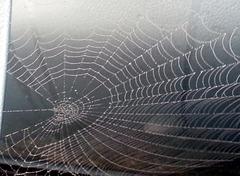 Spinnennetz am Auto