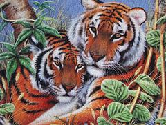 """'Tiger Tiger"""""""