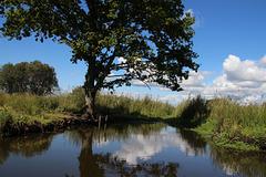 parc naturel de la brière st Joachim