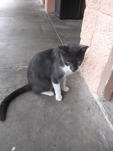 Le chat sympa à l'oreille coupé / Cut ear friendly cat.