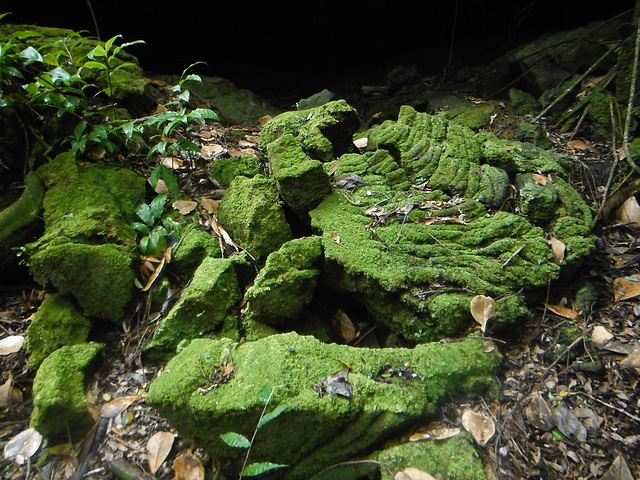 Moss covered rubble