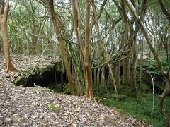 Haena Lava Tube Cave