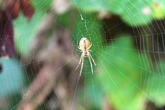 Mme araignée sent l'automne!