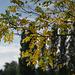 rideau ... de feuilles