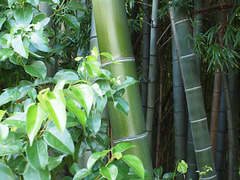 Bamboo green_2
