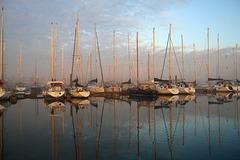 Petit matin au Rompoot .....Zélande