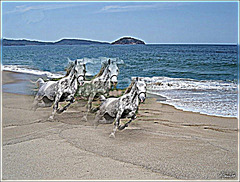 Chevaux d'écume sur la plage.