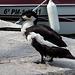 Ente Schwarz-Weiß