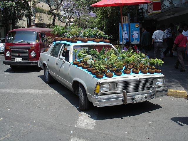Auto bonsaï / Bonsaï car.