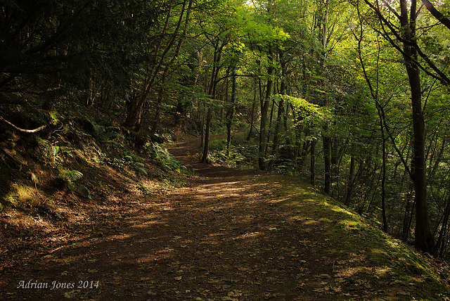 Pontesford Hill