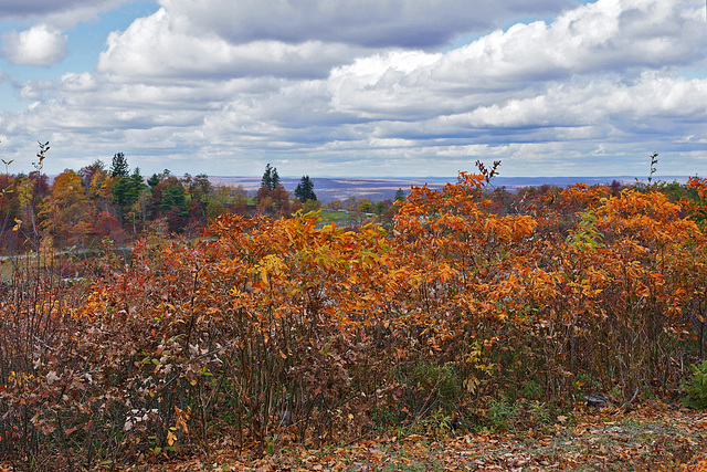 Seeing Red, #1 – High Point State Park, Sussex County, New Jersey