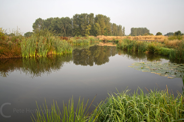 Exe canal ponds