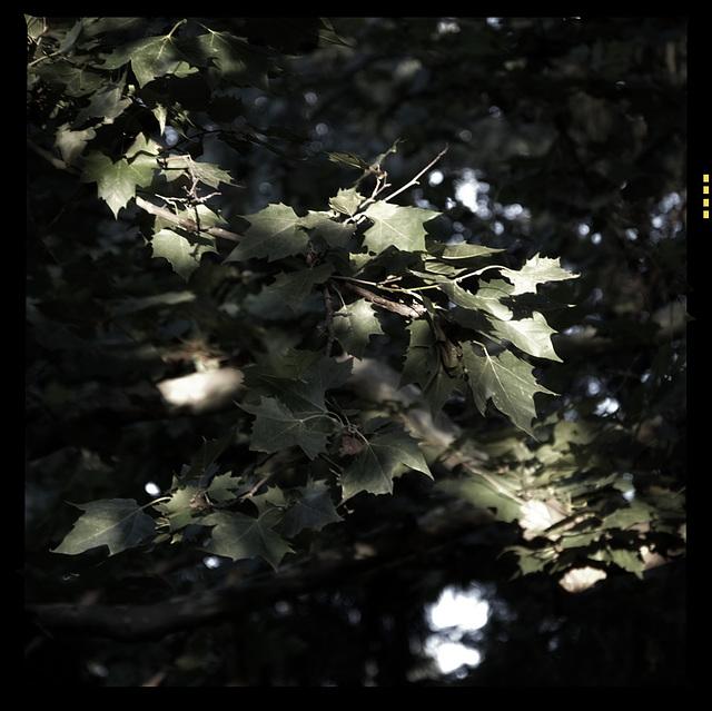 Leaf ~ an epic