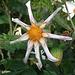 Just a strange star-like flower