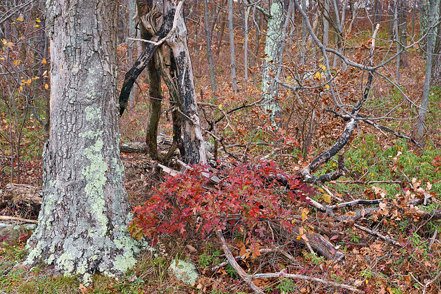 Seeing Red, #3 – High Point State Park, Sussex County, New Jersey