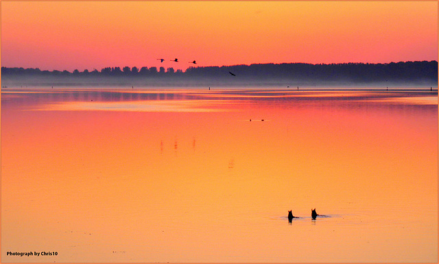 Dance of the Early Birds, photographed by Chris10