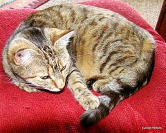 Sybil resting