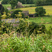 Yorkshire fields