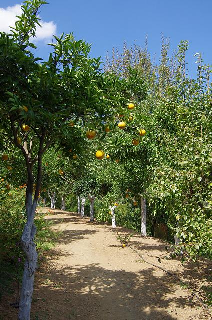 citrus avenue