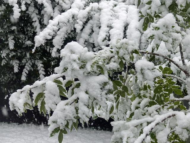 Early September snowfall : (