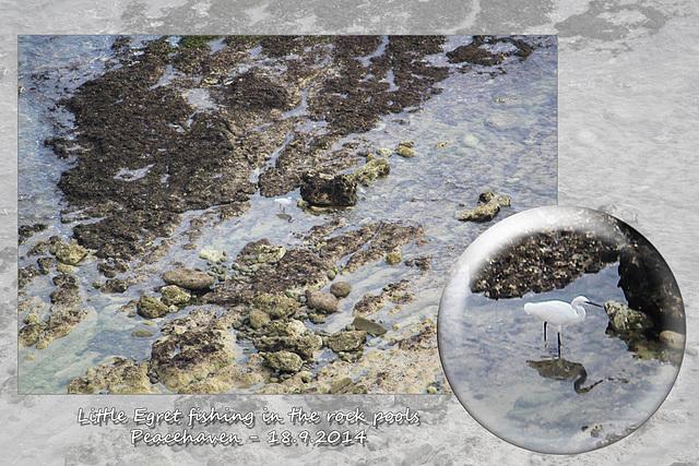 Little Egret - Peacehaven - 18.9.2014