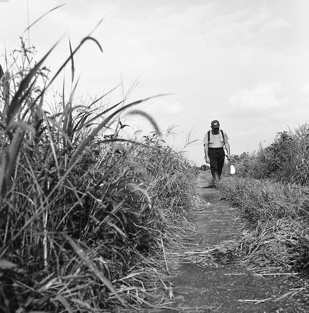 Rice cultivator