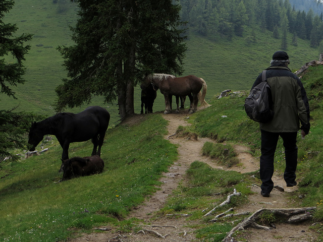 Weg für Tier und Mensch