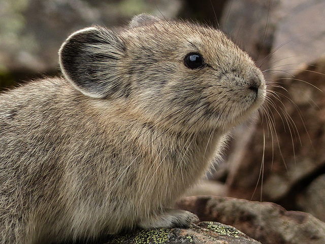 A change from Marmots